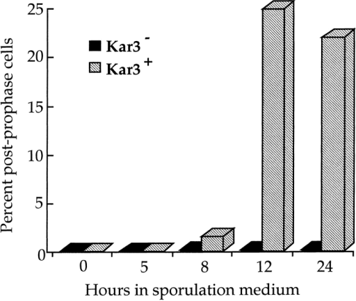 kar3 mutant cells are blocked before metaphase I. The  frequency of cells exhibiting unquestionable postprophase I morphology was determined for both the wild-type and kar3 cells.  n ⩾ 28 for each time point.