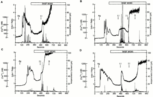 The Ca2+ ionophore 4-Br A23187 is effective in increasing [Ca2+]i and eliciting secretion when ICRAC is inhibited by SK&F 96365. Antigen (Ag) (1 μg/ml) stimulation of individual RBL-2H3 cells elicited an increase in intracellular Ca2+ (upper trace) as well as a burst of amperometric events (lower trace) corresponding to exocytosis of secretory granules. Four typical single-cell responses are shown. When Ca2+ influx was inhibited by adding 50 μM SK&F 96365, intracellular Ca2+ dropped, and secretion was immediately halted. Subsequent addition of 1 or 2 μM 4-Br A23187 (1 I or 2 I, respectively) caused an increase in intracellular Ca2+ to levels similar to those seen in response to antigen and a resumption of secretion. When [Ca2+]i rose to higher levels, a burst of secretory events could often be seen on the rising phase (B and D). However, once the [Ca2+]i reached maximum levels (>1,200 nM), secretion was inhibited. Lysis of the cell with 0.05% saponin (S) released the remaining intracellular serotonin (B and C). The 4 cells shown are representative of 11 cells in which secretion was seen; all 11 cells secreted in response to both antigen and ionophore.