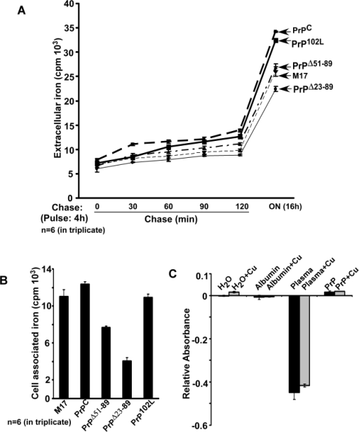 PrP is not involved in the export of iron from cells.(A) Cells expressing PrPC, PrPΔ51–89, PrPΔ23–89, and PrP102L were radiolabeled with 59FeCl3, washed with PBS supplemented with DFO, and chased in complete medium for 30, 60, 90, 120 min, and 16 hours. At the indicated time points equal aliquots of medium samples were quantified in a γ-counter. Estimation of released 59Fe does not show a significant difference between the indicated cell lines at any time point. n = 6 experiments in triplicate. (B) Cell associated 59Fe after 16 h of chase reflects the ferritin iron content of each cell line noted in Figure 1 above, though the difference between cell lines is significantly less. (C) Possible ferroxidase activity of recombinant PrP was measured using the established colorimetric method [44] with modifications. Negative controls included water and albumin supplemented with copper, and positive controls included plasma in the absence or presence of copper. Recombinant PrP does not show detectable ferroxidase activity either in the absence or presence of copper, whereas plasma shows a robust reaction under similar conditions.