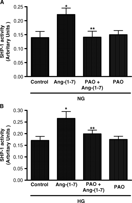 Effect of phenylarsine oxide (PAO) on SHP-1 activity in normal glucose or high glucose. (A) The effect of Ang-(1–7) (10−7 M) on SHP-1 activity in normal glucose is depicted (NG, 5 mM) with or without PAO (10−7 M). *P < 0.001 versus control, **P < 0.001 versus Ang-(1–7); n = 3. (B) The effect of Ang-(1–7) (10−7 M) on SHP-1 activity in high glucose is depicted (HG, 25 mM) with or without PAO (10−7 M). *P < 0.01 versus control, **P < 0.05 versus Ang-(1–7); n = 5. Results are presented in arbitrary units.