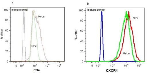 Flow cytometry analysis shows equivalent numbers of CD4 and CXCR4 molecules on the surface of HeLa/CD4 and NP2/CD4/CXCR4 cells. Cells were stained with Pacific blue conjugated mouse anti human CD4 and PE conjugated mouse anti human CXCR4, with appropriate isotype and unlabelled cell controls. (a) NP2/CD4/CXCR4 and HeLa/CD4 cells showed similar log shifts in CD4 fluorescent intensity, compared to isotype controls. (b) NP2/CD4/CXCR4 and HeLa/CD4 cells show similar log shifts in CXCR4 fluorescent intensity, compared to isotype controls.
