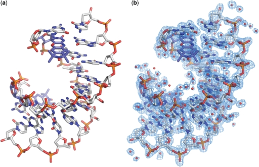 Overall crystal structure of a DNA containing Ç. (a) Stick figure representation of an A-form duplex DNA crystal structure containing Ç solved at 1.7 Å resolution. For clarity, Ç is shown in light blue carbon backbone and the remainder of the DNA is shown in gray carbon backbone. (b) Final crystallographic model containing waters overlaid with the 2/Fo/−/Fc/ electron density map shown in blue mesh and contoured at 1.0 σ.
