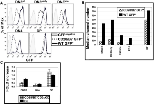 CD28/B7-dependent development suppresses RAG2 expression in DN but not DP cells.(A) Histograms show GFP+ (RAG2) staining on the FCM gated cell populations from WT GFP+ (solid line) or CD28/B7 GFP+ (dashed line) mice. Gates used to identify early and late DN3 subsets are as described in Figure 1B. The grey filled histograms show FL1 staining of the indicated DP and DN subsets analyzed from GFP− mice. (B) This graph depicts the median channel number of GFP+ cells shown in panel (A) and is representative of three experiments performed. (C) This graph summarizes real-time PCR quantification of RAG2 expression in FCM-sorted DN2/3, DN4 and DP cells from B6 and CD28/B7/CD3εKO thymi. RNA was prepared and cDNA was synthesized as described in Materials and Methods. RAG2 cDNA was amplified using SABiosciences RT2qPCR primers. RAG2 expression was normalized against β-actin expression. Real-time analysis was performed on three independent cDNA samples for each genotype. Data are expressed as mean fold increase ± SE relative to B6 DN2/3 cells.
