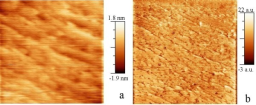 Contact-mode scanning probe images of a 1 μm × 1 μm area on the sample with NCs near the surface. (a). AFM amplitude image. (b). SCM image of the same area.