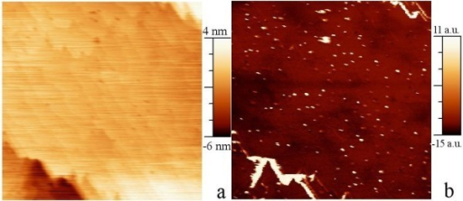 Contact-mode scanning probe images of a 1 μm × 1 μm area on the samples with NCs 50 nm below the surface. (a). AFM amplitude image. (b). SCM image of the same area.