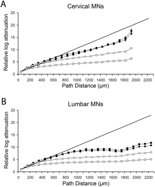 Comparison of morphoelectrotonic transformations with their original geometry in (A) cervical and (B) lumbar MNs. Somatopetal log attenuations of PSPs were computed from thousands of dendritic locations per neuron and divided by the mean attenuation calculated from locations within 100 μm from the soma. Finally, these ratios (relative log attenuations) were averaged and graphed over 100 μm path distance ranges from the soma. Attenuation ratios were computed in four different models of MNs by using 1.4 MΩ neuron resistance with homogeneous (Rms = Rmd) and inhomogeneous (Rms < Rmd) soma-dendritic membranes (closed and open rectangles) and by 5 MΩ neuron resistance with homogeneous and inhomogeneous membranes (closed and open circles). In homogeneous membrane models Rmd was equal to Rms, in inhomogeneous models Rmd = 20000 Ωcm2 was assumed. The common specific membrane resistance for the soma and dendrites in homogeneous models and the Rms values in inhomogeneous models were defined to have neurons with 1.4 or 5 MΩ input resistance measured at the soma. Continuous linear thick line is a reference where data points would be positioned if METs cause proportional changes in size of dendrites relative to their morphological appearance. Note that many error bars, representing S.E.M.s, are too small to be visible because of the high numbers of sampling sites.