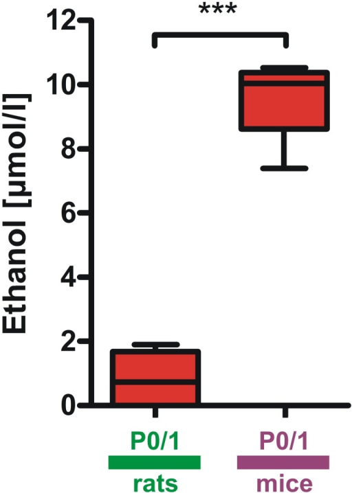 Differences of urethane metabolism in mice and rats within the first postnatal week.In P0/1 mice ethanol concentrations in blood plasma 60 minutes after urethane administration were significantly higher than in P0/1 rats. Ethanol in plasma from P6/7 rodents was not detected. Box and whisker plots (displaying 75th percentile, median and 25th percentile) are shown, whiskers indicate minimum and maximum values. ***P<0.001.