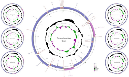 Mitochondrial genome maps of T. urticae (green and red forms), T. kanzawai, T. ludeni, T. malaysiensis, T. phaselus and T. pueraricola.From outer to inner, the 1st circle shows the gene map and tRNA genes are abbreviated by triple letter, with Leu1 = CUN, Leu2 = UUR, Ser1 = AGN and Ser2 = UCN. The 2nd circle shows the GC content and the 3rd shows GC skew calculated as (G−C)/(G+C). GC content and GC skew are plotted as the deviation from the average value of the entire sequence.