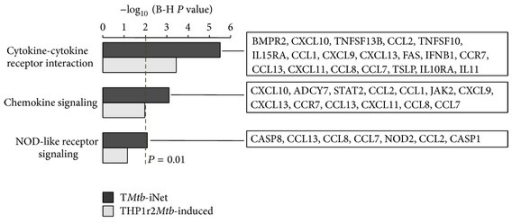 KEGG pathway analysis of TMtb-iNet and THP1r2Mtb-induced signature. KEGG pathways enriched in the two signatures (TMtb-iNet and THP1r2Mtb-induced) are displayed (FDR < 0.01). The refined genes in TMtb-iNet are listed on the right. Also see the gene list in Table S5.