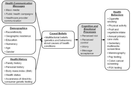 Conceptual framework. This framework describes how multiple factors can influence causal beliefs. These beliefs in turn can affect health cognitions, emotions, and subsequent health behaviors. Concepts examined in the present study are shown in the white boxes. The shaded boxes include additional relevant factors that provide a context for these processes. We do not examine these additional factors in the current research, but they could serve as targets for future research.
