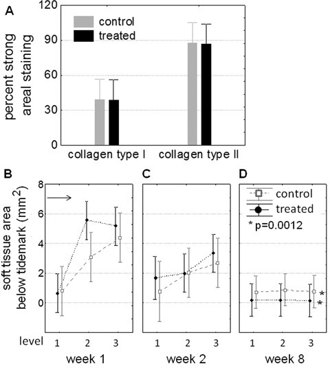 Quantitative measures of cartilage repair tissue collagen content and residual soft tissue area in microdrilled defects. (A) In 8-week repair tissues above the projected tidemark, collagen matrix composition through the drill holes was unchanged by treatment (N = 7, average ± standard deviation). (B-C) Soft tissue below the projected tidemark diminished over time in all drill holes; however, significantly more soft tissue remained below control defects at 8 weeks (D; N = 7, average ± 95% confidence intervals). Levels 1, 2, and 3 refer to sections analyzed between, at the edge, and through the drill holes. The horizontal arrow (B) refers to the theoretical initial area occupied by two 1.0-mm-diameter, 3.5-mm-deep microdrill holes.