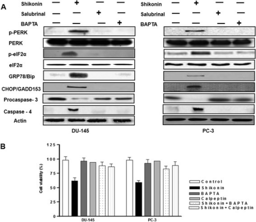 Induction of ER stress is critical in Shikonin induced effects in DU-145 and PC-3 prostate cancer cells (A) Effect of Solubrinal or BAPTA on ER stress protein expression in DU-145 and PC-3 cells. Protein expression of ER-stress was examined in pre-treated with BAPTA or Salubrinal in DU-145 and PC-3 cells, and western blot experiments were performed as described previously. (B) Inhibition of intracellular calcium or calpain reveses shikonin induced inhibition of cell viability. Cell viability was quantified using the CCK-8 assay in BAPTA or Calpeptin pretreated DU-145 and PC-3 cells. Data is expressed in means ± SEM and represents the results of three independent experiments.