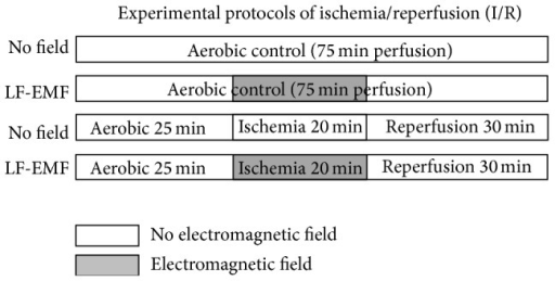 Schematic representation of the perfusion protocol for isolated rat hearts subjected to global no-flow ischemia and protected with low frequency electromagnetic field (LF-EMF).