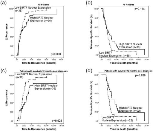 SIRT7 may act as a prognostic factor for patients with pancreatic cancer.Survival analysis of the entire cohort did not reveal any significant differences in (a) disease-free survival or (b) disease-specific survival time between patients whose tumours had low or high SIRT7 nuclear expression. However, it was apparent from the survival plots that there was a division of the low/high SIRT7 expression lines at approximately 12–14 months. Analysis was therefore performed on the subset of patients that survived longer than 12 months (n = 44). Patients with low SIRT7 nuclear expression exhibited (c) a shorter disease-free survival time (p = 0.028, 20.1 vs 38 months) and (d) a decrease in disease-specific time (p = 0.026, 26.9 vs 43.1 months) than patients whose tumour expressed high SIRT7 levels.