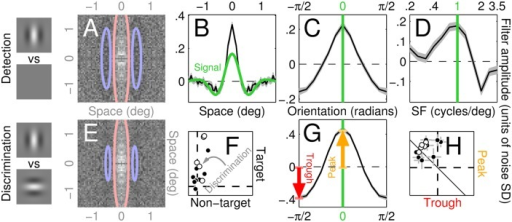 Perceptual filters used by human observers to detect/discriminate stimuli.A-D show aggregate (across observers) perceptual filters (PF) for detecting the vertical Gabor target (icons to the left of A) returned by reverse correlating different noise types: 2D (A), 1D (B), Θ (C) and SF (D; see Fig 1 for image samples of all four classes). Red/blue lines in A show positive/negative contours through a Gabor fit to the data. Green trace in B and green lines in C-D indicate target signal. Grey shaded regions in B-D show ±1 SEM. Panels E,G show results corresponding to A,C (2D and Θ noise probes) for discriminating vertical from horizontal Gabor targets (icons to the left of E). F plots match between 2D PF's and target/non-target signals on y/x axes (non-target as specified in the discrimination task) for both detection (solid) and discrimination (open) across different observers (different data points). H plots filter amplitude of orientation-tuned PF's (C,G) at 0 (peak, y axis) and ±π/2 (trough) using similar conventions. Error bars (±1 SEM) in F,H are sometimes smaller than symbols and therefore not visible. The centre value of 2D PF's (A,E) is effectively undefined because occluded by the fixation marker (see Methods).