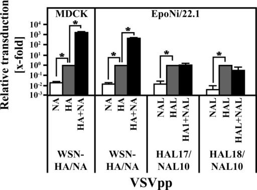 NAL of batFLUAV has no impact on the transduction efficiency of vectors bearing HAL.Vesicular stomatitis virus-based pseudotypes (VSVpp) harboring the indicated surface proteins of FLUAV or batFLUAV were treated with trypsin before inoculation of MDCK and EpoNi/22.1 cells. At 18–20 h post inoculation, the transduction efficiency was measured by quantification of the activity of the VSVpp-encoded luciferase. The combined data from three independent experiments (quadruplicate samples) with separate pseudotype preparations are shown. Transduction efficiencies were normalized against pseudotypes harboring only HA or HAL (set as 1) and are given as x-fold changes on a logarithmic scale. Error bars indicate standard error of the mean. A two-tailed, paired student's t-test was used to test statistical significance (* = p < 0.05).
