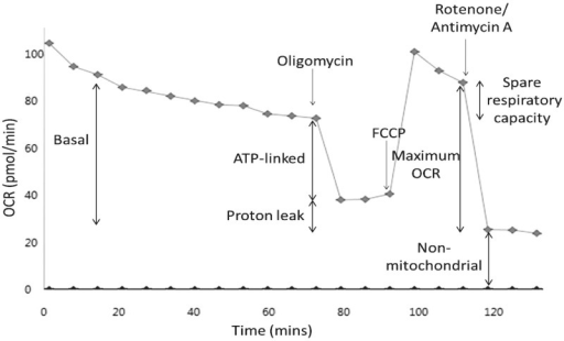 Representative control mitochondrial stress test trace. Mitochondrial stress test assays consisted of a series of compound injections into the cell culture microplate. Flutamide/2-hydroxyflutamide or vehicle control (shown) was first injected, followed by 9 measurement cycles. Remaining injections consisted of oligomycin (ATP synthase inhibitor), FCCP (OXPHOS uncoupler), and rotenone/antimycin A (complex I and III inhibitors, respectively) with each followed by 3 measurement cycles. This series of manipulations enabled the calculation of parameters: basal, ATP-linked, maximum, and non-mitochondrial OCR, as well as proton leak. Each measurement cycle was a total of 6 min.