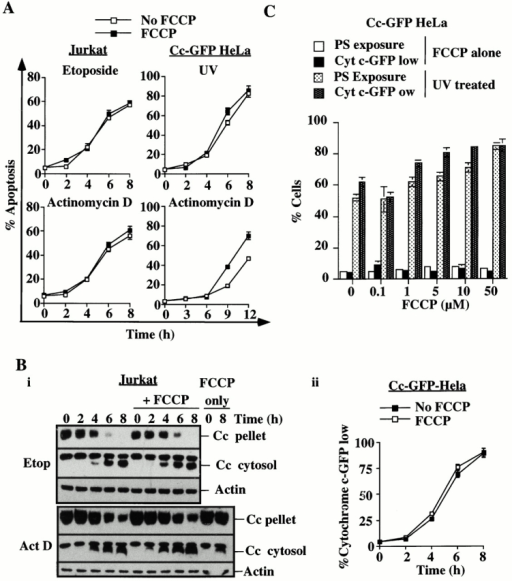 Apoptosis and cytochrome c release proceed in the absence of hyperpolarization. (A) Jurkat cells were treated with etoposide (40 μM) or actinomycin D (500 nM), and Cc-GFP-HeLa cells were treated with UV (180 mJ/cm2) or actinomycin D (1 μM) in the presence or absence of FCCP (5 μM) for the times indicated. The cells were analyzed for phosphatidylserine exposure as a measure of apoptosis. (B) Similar cells to those assayed in A were analyzed for cytochrome c release (Bi) by western blotting (Jurkat) or cytochrome c–GFP release (Bii) by flow cytometry (Cc-GFP-HeLa). (C) Untreated Cc-GFP-HeLa cells or Cc-GFP-HeLa cells treated with UV (180 mJ/cm2) in the presence or absence of the concentrations of FCCP indicated were harvested at 6 h and assayed for phosphatidylserine exposure (annexin V-FITC binding) or cytochrome c–GFP release (CLAMI assay) by flow cytometry.