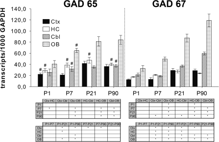 Expression of GAD65 and GAD67 in rat cortex (Ctx), hippocampus (HC), cerebellum (Cbl), and olfactory bulb (OB) at different postnatal ages.Probes were examined for GAD transcript expression by qPCR. Numbers of transcripts were calculated per 1000 transcripts of GAPDH. Data represent mean±SEM of five individual animals. #P≤0.05, compared with expression of GAD67 within the same region and at the same postnatal day and as evaluated by Mann-Whitney U test. *P≤0.05, the comparison of regions at each analyzed postnatal day (upper tables) and the comparison of ages within each region (lower tables) as analysed by one-way ANOVA followed by Tukey's post hoc test.