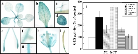 Activity of the 337 bp upstream promoter fragment. Homozygous plants expressing the S5 construct (Fig. 3, 337 bp promoter fragment fused to GUS) were assayed for the activity of the reporter gene. a–i Histochemical staining of non-stressed plants. a Shoot of soil grown plant. b Mature leaf of soil grown plant. c Trichome. d Cross-section of inflorescence stem. e Roots. f Emerging lateral root. g Root hairs. h Flower. i Silique. j Quantitative analysis using homogenates (five independent lines, 50 seedling each) from seedlings grown for 2 weeks in the 0.5× MS solid medium without (white bar) or containing in addition 50 mM NaCl (black bar), 25 mM Na2SO4 (diagonally dashed), 50 mM KCl (dotted), 100 mM mannitol (horizontally dashed), or 20 μM ABA (vertically dashed)