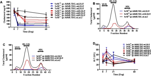 Evaluation of AAV8 encoding mouse Vldlr or mouse Ldlr in Ldlr-/-Apobec1-/- Mice.(A) Plasma cholesterol levels in Ldlr-/-Apobec1-/- mice after treatment with AAV8.TBG.mVLDLR or AAV8.TBG.mLDLR (n = 5 animals per dose group). Each point represents mean ± s.d. *P<0.05, **P<0.01, ***P<0.001 (B and C) Pooled mouse plasma from AAV-injected Ldlr-/-Apobec1-/- (n = 5) were analyzed by FPLC fractionation and the cholesterol content of each fraction was determined. (B) Lipoprotein profile of animals injected with 1×10∧12 GC of vector 28 days after treatment. (C) Lipoprotein profile of animals injected with 3×10∧11 GC of vector 28 days after treatment. (D) Plasma ALT levels in Ldlr-/-Apobec1-/- mice after treatment with AAV8.TBG.mVLDLR or AAV.TBG.mLDLR (n = 5 animals per dose group). Each point represents mean ± s.d. At all time points and doses examined, no significant differences in ALT were detected between AAV8.TBG.mLDLR and AAV8.TBG.mVLDLR.