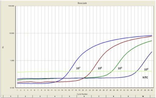 how to detect primer dimer