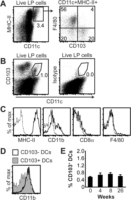 Identification of gastric lamina propria DCs.(A) Flow cytometric analyses of CD11c+MHC-II+ cells in the gastric lamina propria of individual mice revealed two F4/80− DC populations with differential expression of CD103 (lower quadrants in the F4/80 versus CD103 dot plot). (B) Expression of CD103 and CD11c by gastric lamina propria cells. The gate for CD103+ DCs is indicated. Isotype, isotype-matched control antibody for CD103. (C) Expression of MHC-II, CD8α, F4/80 and CD11b by gated CD11c+CD103+ cells. Dotted lines show staining with isotype controls. (D) Expression of CD11b by CD103− and CD103+ DCs. DCs were gated as described in A. (E) Frequency of CD103+ DCs in the gastric lamina propria at the indicated time points after H. pylori infection. Data represents means ± SEM of 7–15 individual mice. LP, lamina propria.