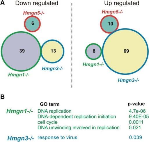 Effects of HMGNs knock out on transcription in primary MEFs. (A) Venn diagrams of down- and upregulated genes in primary MEFs. (B) GO analysis of affected genes (P <0.05).
