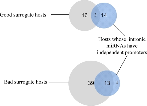 Venn diagrams.Venn diagrams showing overlap between good and bad surrogate host genes and hosts whose intronic miRNAs have predicted promoters.