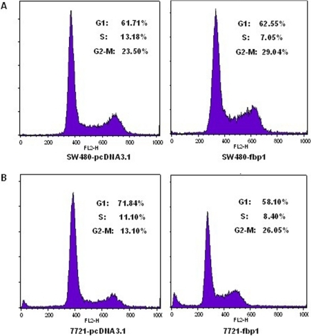 Effect of FBP1 on the cell cycle of liver and colon cancer cell line.The cell cycle distribution of liver and colon cancer cell line (SW480 and SMMC-7721) with and without FBP1 expression was evaluated by flow cytometry analysis. (A) and (B) Representative fluorescence -activated cell sorting analysis of cancer cells transfected with or without FBP1.
