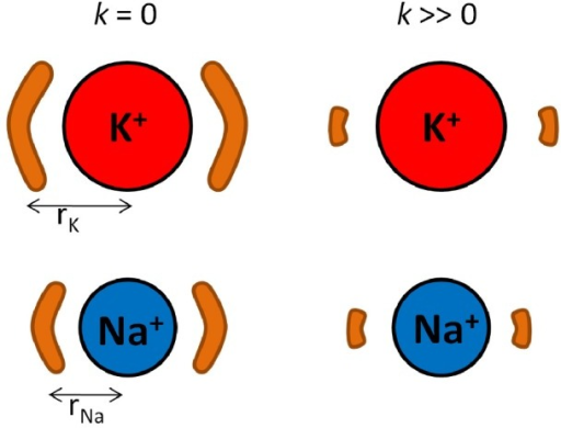 A depiction of the origin of selectivity via the RLF mechanism.Selectivity arises from the difference in the entropy change from unconstrained ligands () to constrained ligands () between K+ and Na+. The brown regions represent the volume in which two ligands can move about the ion. As the ligands' fluctuations become constrained, the ligands experience a greater decrease in available volume and thus entropy when coordinating a large ion than when coordinating a smaller ion.