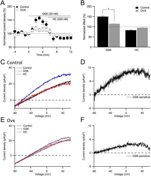 TRPV4 channel activation evokes a smaller response in ovx endothelial cells.A: Time course of the whole-cell current density evoked at +30 mV from control (solid) and ovx (open) endothelial cells using perforated patch clamp technique. Following a stable baseline, 30 nM GSK1016790 (GSK, 0 min) was added to the bath to activated TRPV4 channels, followed by bath application of 500 nM HC067047 (HC, 6 min) to block them. Time course was normalized to baseline. B: Averaged current density in the presence of GSK (3–5 min as shown in A) and GSK+HC (9–11 min), normalized to the control current density (−3 to −1 min). Asterisk (*) indicates statistical significance (P<0.05, t-test). C: Representative traces recorded from an endothelial cell obtained from control mesenteric artery at different conditions as shown in (A), before (control) and after subsequent bath addition of GSK (GSK) and GSK+HC (HC). Whole cell current density was elicited with −80 to +60 mV voltage-ramps. D: GSK-sensitive whole-cell current density isolated from digital subtraction of the traces (C) for control cells. E: Representative perforated whole-cell current density obtained from ovx endothelial cells. F: GSK-sensitive current density isolated from digital subtraction of the traces (E) for ovx cells.