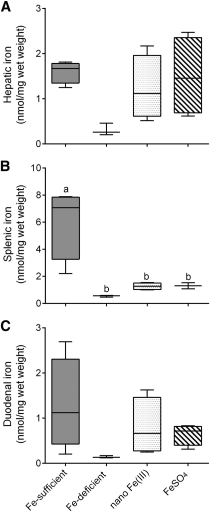 Tissue Fe distribution in male CD1 mice after supplementation with nano Fe(III) and FeSO4. Nonheme-iron concentrations in the liver (A), spleen (B), and duodenum (C) of mice after 7-d feeding with test diets supplemented with nano Fe(III) or FeSO4. Concentrations in control mice maintained in the Fe-sufficient or the Fe-deficient diets throughout the study are also shown. Box and whisker plots show median, minimum, and maximum (n = 3 in the Fe-deficient group; n = 4 in each of the other groups). Labeled means without a common letter differ, P < 0.05 (1-factor ANOVA). FeSO4, ferrous sulfate.