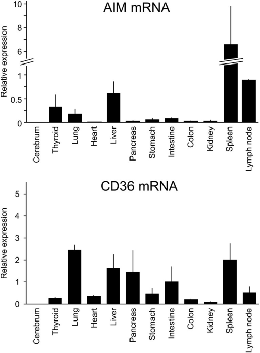Expression levels of AIM and CD36 mRNA in five healthy adult dog tissues. These geneexpression levels were normalized to GAPDH. The columns and error bars represent themeans and their standard errors.
