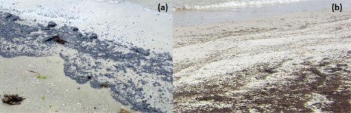 Comparison of Galveston Bay and Deepwater Horizon oil spill deposition patterns: a) blackish oily material deposited on a sandy beach in Galveston Bay, Texas (Photo taken on March 23rd, 2014, by NOAA's Office of Response and Restoration); b) brownish emulsified oil deposited on a sandy beach in Orange Beach, Alabama (Photo taken on June 11th, 2010, by Auburn University team).