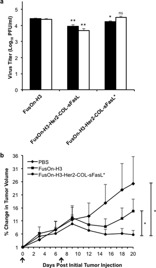 In vivo passaging of FusOn-H3-Her2-COL-sFasL results in a virus adapted for enhanced in vitro replication and significantly extends the therapeutic effect of the oncolytic virus in a 4T1 immunocompetent in vivo model(a) Comparative analysis of in vitro replication efficiencies of control and in vivo passaged viruses in 4T1 cells. 4T1 cells were infected in triplicate with designated virus at an MOI of 10. Cells were collected at 24 (black bars) and 48 hours post infection (white bars) and total infectious virus quantified through titration in Vero cells. ns, not significant; *p< 0.01; **p<0.001 as compared to respective 24 or 48 hour FusOn-H3 titer according to student's T test. (b) Enhanced therapeutic efficacy of FusOn-H3-Her2-COL-sFasL* in 4T1 syngeneic in vivo model. 4T1 subcutaneous tumors were established in right flanks of BALB/c mice by injection of 1×105 cells per mouse. Once tumors reached the average diameter of 4mm, tumors were intratumorally injected with PBS as a control, 1×107 pfu FusOn-H3, or 1×107 pfu FusOn-H3-Her2-COL-sFasL* on day 0 and day 7 (black arrows). Tumors were measured every 3 days with a caliper. Percent change in tumor volume was calculated by dividing the daily tumor volume by the tumor volume measurement at day 0. These measurements were then averaged (n=5 mice per group). No statistical difference between FusOn-H3 and FusOn-H3-Her2-COL-sFasL virotherapy was detected prior to day 20. *p<0.05 on day 20 according to student's T test. Error bars represent ±SEM.