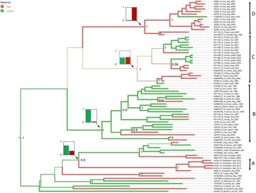 Maximum clade credibility tree using host species as a discrete trait, using only sequences from viruses detected in wild canids or dogs.Branches are coloured by the most probable host species (dogs or wildlife) of the progeny node, with inset plots of relative probability at key nodes.