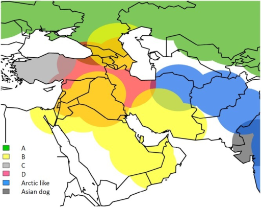 Map showing distribution of virus variants in Middle East, with clades coloured according to Fig. 1.Approximate distribution of each detected RABV lineage is displayed using ArcGis (ESRI ArcGis version 10.0).