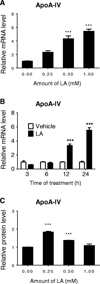 LA inducedapoA-IVgene expression in Caco2 cells. Differentiated Caco2 cells were supplemented with or without different amount of LA for 24 h (A) or for the indicated time with 1 mM LA (B) up to 24 h. The apoA-IV mRNA levels were measured by real time RT-PCR. The levels of apoA-IV protein released into culture medium from the cells were measured by ELISA (C). ***P <0.001 vs. TC vehicle control.