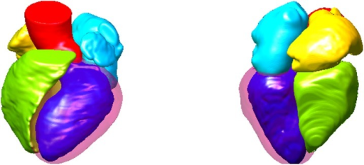 Two views of atlas mesh corresponding to the synthesized mean image.Different colors indicate different structures.