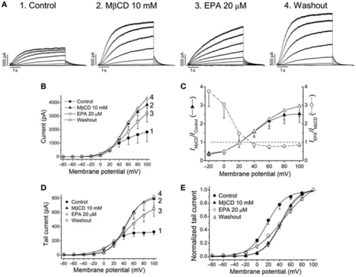 Effects of EPA in membrane cholesterol-depleted cells with methyl-β-cyclodextrin (MβCD). (A) Current records obtained from the same cell and generated by KV7.1-KCNE1 channels in control, after perfusion with MβCD, with EPA and after washout the cells with EPA-free external solution. (B) Current-voltage relationships under all conditions shown in (A). (C) Plot showing the voltage dependence of the MβCD and EPA effects (D) Activation curves and (E) normalized activation curves. Moreno et al. (2015).