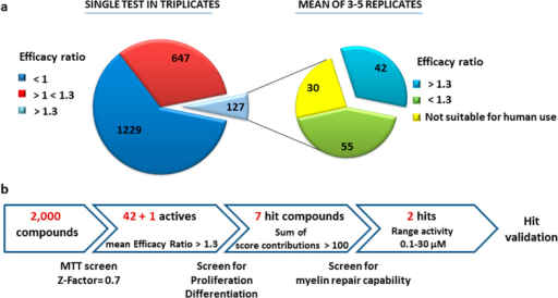 Cell-based screen identifies molecules with myelin repair potential.(a) Distribution of compounds in primary screen sorted by MTT Efficacy Ratio (n = 2,000). (b) Stepwise strategy followed to select 2 remyelinating hits for validation studies.