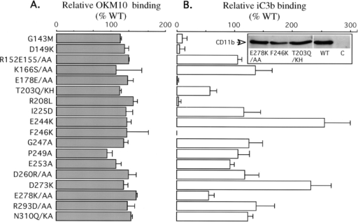 Effects of A-domain  mutants on CR3 surface expression and iC3b binding.  (A) Histograms (mean ±  SEM, n = 3) showing the relative binding of anti-CD11b  mAb OKM10 to COS cells  expressing mutant CR3. (B)  Histograms (mean ± SEM,  n = 3) showing the relative  binding of iC3b to COS cells  expressing CR3 mutants. (Inset) Radioautograph of a  Western blot showing comparable amounts of the  CD11b subunit in anti-CD18  immunoprecipitates from  COS cells expressing WT or  mutant CR3. No CD11b was  seen in anti-CD18 immunoprecipitates from COS cells  transfected with CD18  cDNA alone.