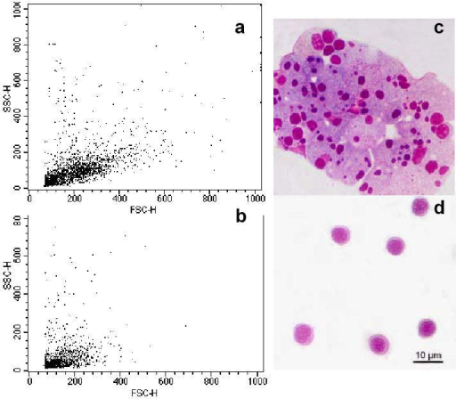 Fig. 3Purification of seabream GALT cells by Percoll density gradients. (a) Representative flow cytometry dot plot of intermediate density band (ID) corresponding to 1.060 g/l. (b) Representative flow cytometry dot plot of cells found at the highest density band (HD) (1.075 g/l). (c) Light micrograph of a Giemsa stained cytocentrifugation of ID band cells. (d) Light micrograph of a Giemsa stained cytocentrifugation of HD band cells.