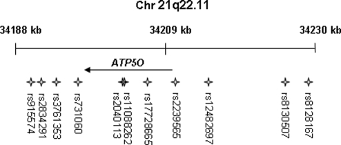 Chromosomal position of ATP5O and location of analyzed SNPs.