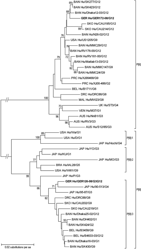 Phylogenetic dendrogram of viral protein 4 (VP4) P[6] and P[8] rotaviruses at the amino acid level. Bootstraps values (1,000 replicates) >65% are shown. The strain name is prefixed by the country of origin (AUS, Australia; BRA, Brazil; BAN, Bangladesh; BEL, Belgium; DRC, Democratic Republic of Congo; GER, Germany; JAP, Japan; MAL, Malawi; PRC, People's Republic of China; SKO, South Korea; UK, United Kingdom; USA, United States of America; VEN, Venezuela) as well as the viral host (Hu, human) and followed by the associated G genotype. Boldface indicates strains of this study. GenBank accession numbers of VP4 genes compared: P[6] B1711 ABU49763, CAU195 ABK62863, CAU214 ABK62864, Dhaka12–03 ABA34207, DRC86 AAY55972, M37 AAA57560, Matlab13–03 ABA34208, MMC147 ACJ54810, MMC24 ACJ54809, MMC29 ACJ54804, MW23 CAB92920, N26–02 ABA34209, NnB1 AAC68884, RV161–00 ABF67555, RV176–00 ABF67561, RV3 AAB05652, S12/85 AAC68883, SK277 ACJ54805, SK423 ACJ54803, ST3 ABV53292, US1205 AAC28852, XJ00–486 ABC49694, XJ99–468 ABC49698; P[8] 90–513 BAF80182, 95–87 BAA77555, B3458 ABV66093, B4633–03 ABA34205, CAU202 ABK62865, CAU219 ACD50869, D ABV53244, DH402 ACJ54815, Dhaka16–03 ABF50136, Dhaka25–02 ABA34206, DRC88 AAY55961, Hochi BAB32852, IAL28 ABV53260, KU BAE76023, MO BAA77543, P ABV53276, SK424 ACJ54811, SK430 ACJ54817, Wa AAA47290, Wi61 ABV53300, YO BAA77544.