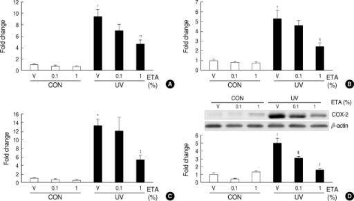 Topical application of ETA prevents UV-induced interleukin-1beta (IL-1β) and cyclooxygenase-2 (COX-2) expressions in hairless mouse skin in vivo. Female HR-1 hairless mice were topically treated with vehicle (ethanol:polyethylene glycol=30:70) only, 0.1% ETA or 1% ETA once a day for 3 successive days after one time irradiation of UV (200 mJ/cm2) on dorsal skins. Skin biopsy was carried out on the fourth day (72 hr after UV irradiation). (A) Expression of IL-1β mRNA was determined by quantitative real-time RT-PCR. (B) Expression of IL-1β protein was analyzed by ELISA. (C) Expression of COX-2 mRNA was detected by quantitative real-time RT-PCR. (D) Expression of COX-2 protein was detected by Western blot analysis. Results are expressed as fold change. Values are mean±SEM (n=8).*P<0.01, †P<0.001 vs. control (CON) vehicle group; ‡P<0.05, §P<0.01 ∥P<0.001 vs. UV-irradiated (UV) vehicle group.