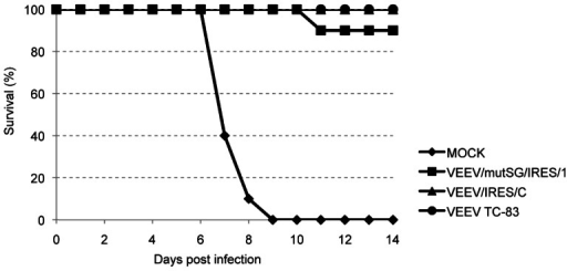 Survival following vaccination and challenge of adult mice.Five-week-old CD1 mice were vaccinated with 105 PFU of VEEV TC-83 or IRES-based viruses. Challenge was performed 6 weeks post-vaccination by SC inoculation of 104 PFU of VEEV IC strain 3908, with daily monitoring of animals. No deaths occurred after day 11 post-challenge.