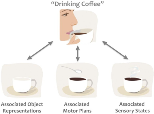 "Example of the common coding theory. Thinking about ""drinking coffee"" activates associated codes, which frequently occur together, such as objects (e.g., coffee cup, coffee beans), motor plans (e.g., the way we like to hold our cup), and sensory states (e.g., the colour, smell, taste of coffee), biasing subsequent processing of any of these associated states."