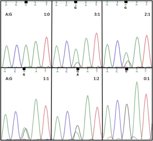 Sequencing chromatogram of pooled DNA. DNA from homozygous chicken (A and G allele) was mixed in 1:0, 3:1, 2:1, 1:1, 1:2 and 0:1 A to G ratios and used as PCR template and sequenced; each chromatogram peak was compared to peaks from pooled DNA samples of heritage breeds and shows the estimated A to G ratio.
